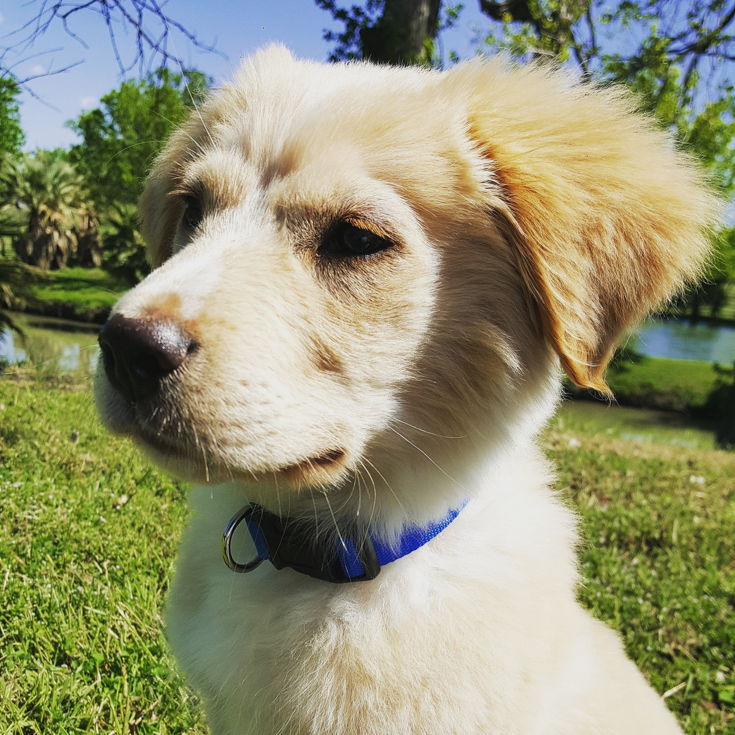 Puppy Colin